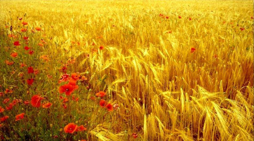Terreno Agricolo in Vendita a Maserada sul Piave