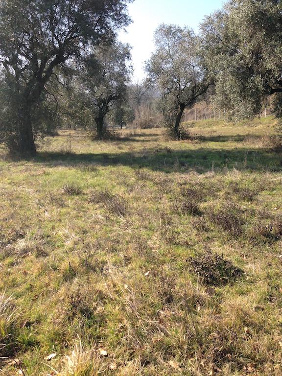 Terreno Agricolo in vendita a Padenghe sul Garda, 9999 locali, zona Località: *COLLINARE*, prezzo € 850.000 | CambioCasa.it