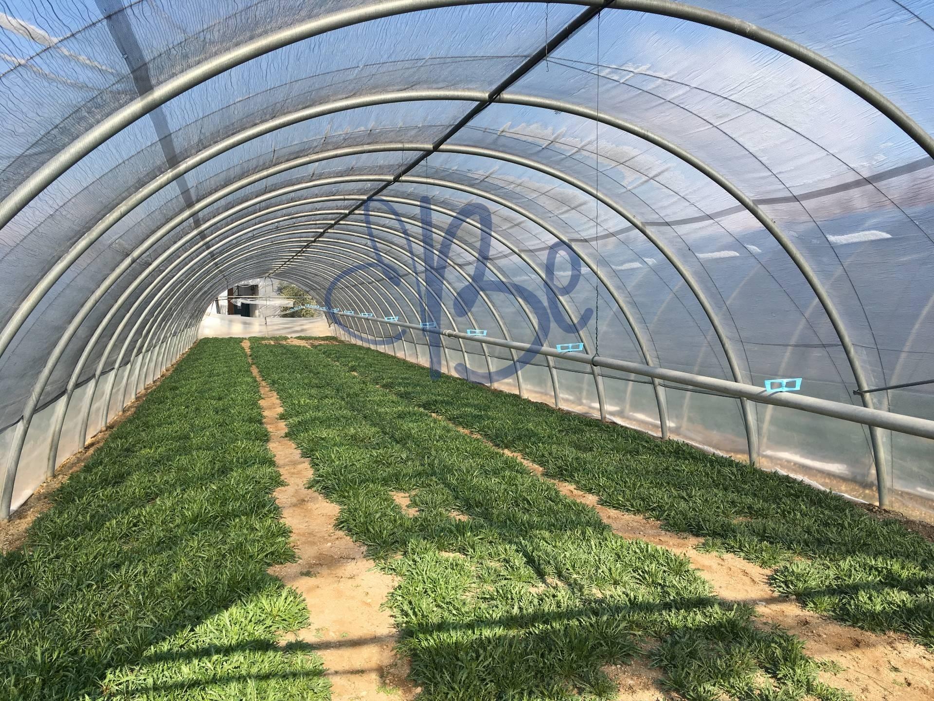 Terreno Agricolo in vendita a Puegnago sul Garda, 9999 locali, zona Zona: Raffa, prezzo € 250.000 | CambioCasa.it