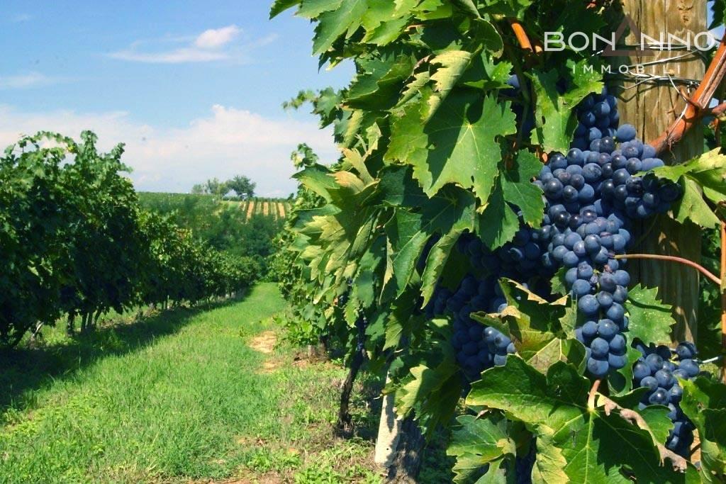 Azienda Agricola in vendita a Annone Veneto, 9999 locali, Trattative riservate | CambioCasa.it