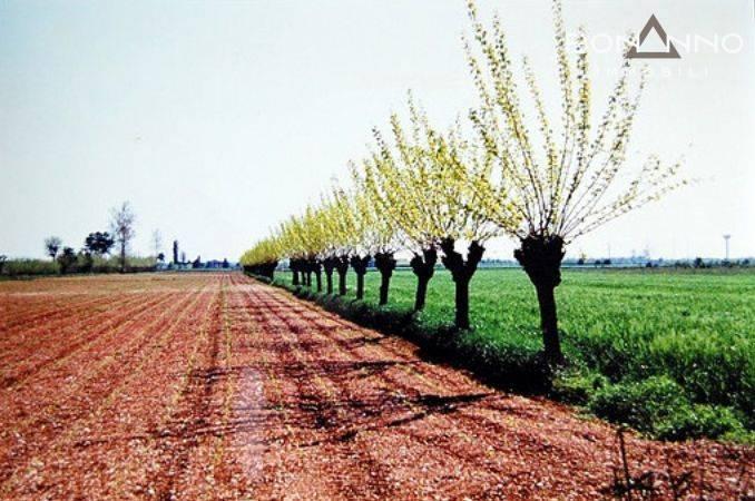 Terreno Agricolo in vendita a Cassola, 9999 locali, prezzo € 83.000   CambioCasa.it