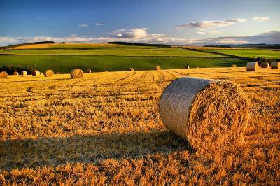 Terreno Agricolo in Vendita a Castello di Godego