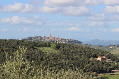 Terreno Agricolo in Vendita a San Gimignano