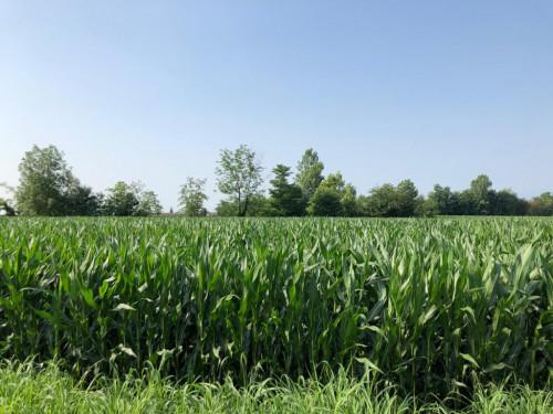 Terreno Agricolo in Vendita a Pinerolo
