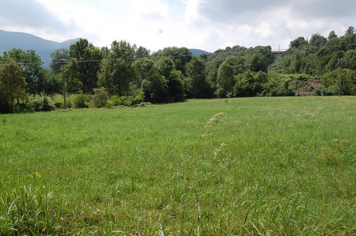 Terreno Agricolo in Vendita a Trana