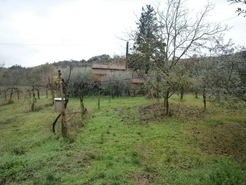 Terreno Agricolo in vendita a San Nazzaro, 9999 locali, prezzo € 45.000   CambioCasa.it