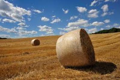 Terreno Agricolo in Vendita a Preganziol