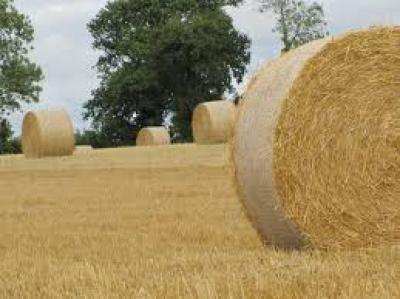 Terreno Agricolo in Vendita a Trevignano