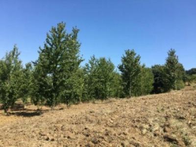 Terreno Agricolo in Vendita a Riccia