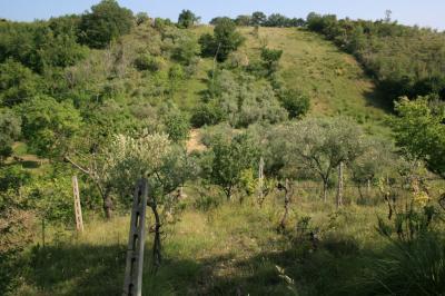 Terreno Agricolo in Vendita a Massignano