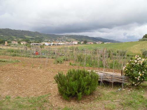 Terreno Agricolo in Vendita a Cupra Marittima